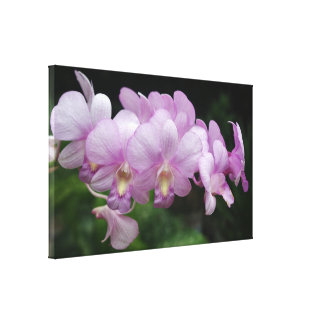 Pinky Orchid Canvas Print