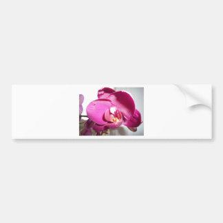 Pinky Purple Orchid Car Bumper Sticker