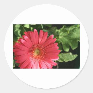 pinky Red Flower Classic Round Sticker