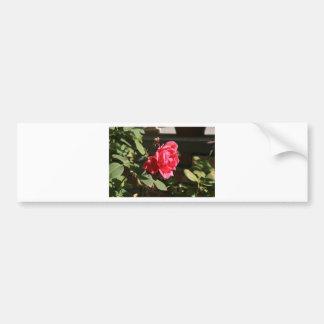 Pinky Red rose Car Bumper Sticker