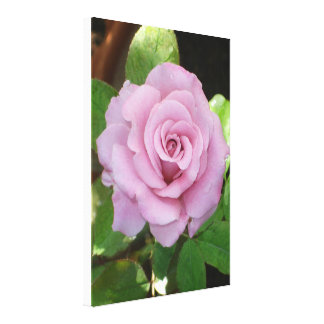 Pinky Rose Blossom Canvas Print