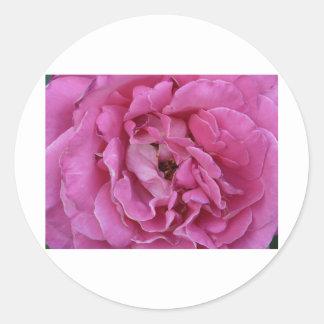 pinky rosy classic round sticker