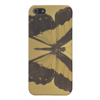 Pinned Butterfly iPhone 5 Cases