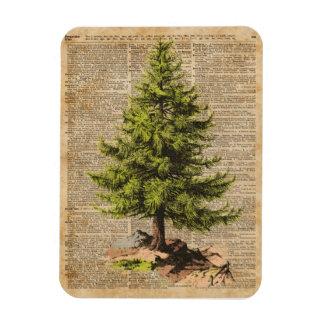 Pino, árbol de cedro, arte del diccionario del iman rectangular