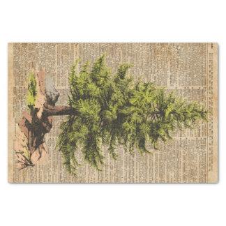 Pino, árbol de cedro, arte del diccionario del papel de seda