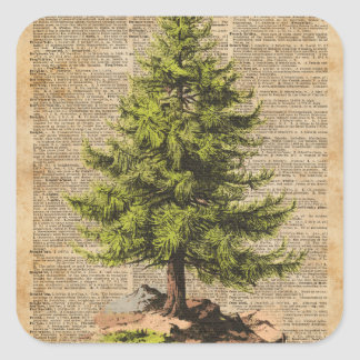 Pino, árbol de cedro, arte del diccionario del pegatina cuadrada