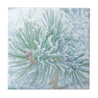 Pino del invierno azulejo cuadrado pequeño