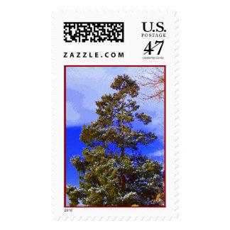 Pino del invierno con franqueo del cielo de sellos postales