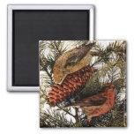 Pino rojo americano del invierno de los pájaros de iman de nevera