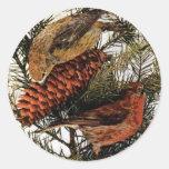 Pino rojo americano del invierno de los pájaros etiquetas redondas