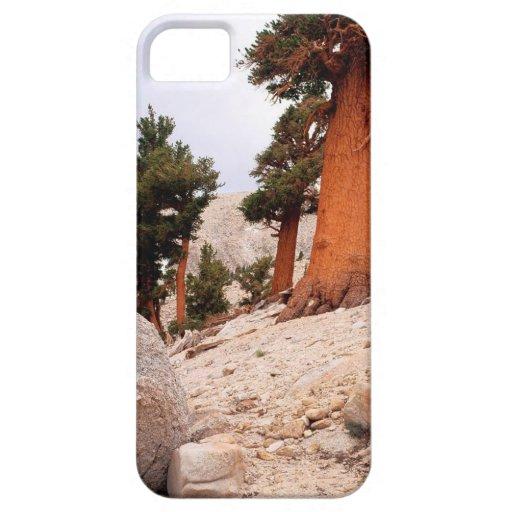 Pino Sierra Nevada del este de la cola del Fox de iPhone 5 Protector