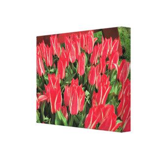 Pinocchio Tulips Canvas Print