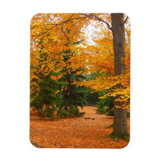 Pinos y árboles imperecederos del otoño iman