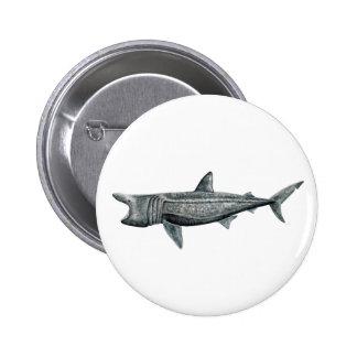Pins, broaches, plates round Shark pilgrim Pinback Button