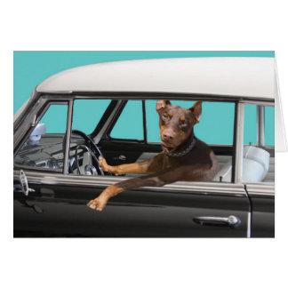 Pinscher del Doberman que conduce el coche clásico Tarjeta De Felicitación