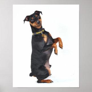 Pinscher miniatura feliz poster