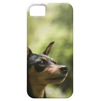 Pinscher miniatura (Minuto-Pin) Funda Para iPhone 5 Barely There