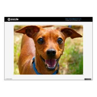 Pinscher Smiling Blue Collar Dog Acer Chromebook Decal