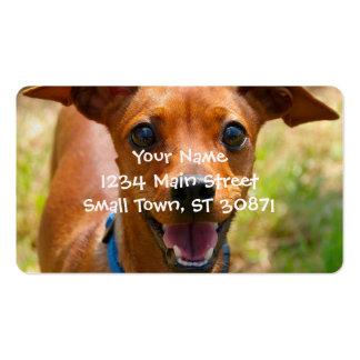 Pinscher Smiling Blue Collar Dog Business Card
