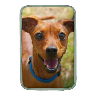 Pinscher Smiling Blue Collar Dog MacBook Sleeve