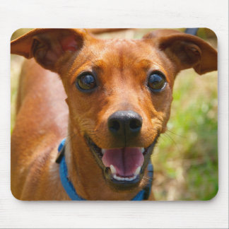 Pinscher Smiling Blue Collar Dog Mouse Pad