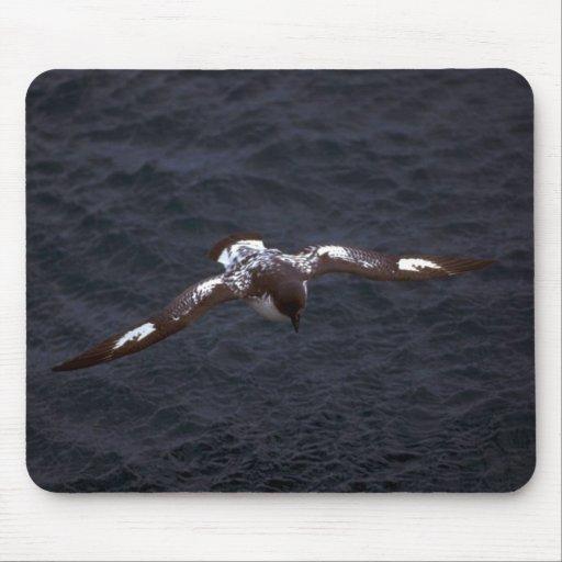 Pintado (Cape) Petrel In Flight Mouse Pad