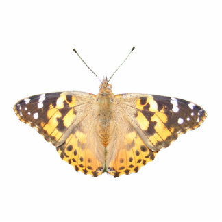 ~ pintado de señora Butterfly de acrílico Adorno Fotoescultura