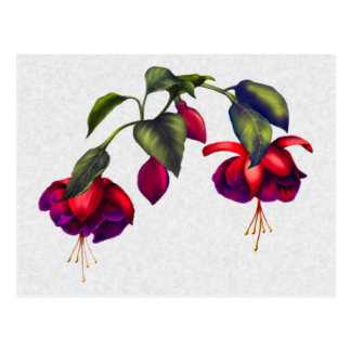 Pintado fucsias púrpuras y rojos postal