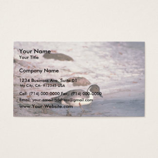 Pintail Business Card