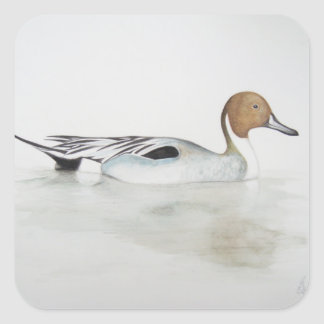 Pintail Duck 2011 Square Sticker