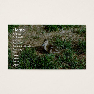 Pintail Duck Business Card