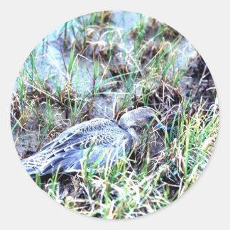 Pintail Duck Classic Round Sticker