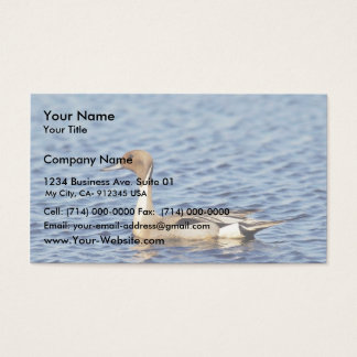 Pintail Duck Drake Business Card