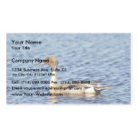 Pintail Duck Drake Business Card Templates