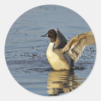 Pintail Duck Drake Round Sticker