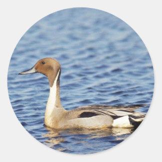 Pintail Duck Drake Sticker