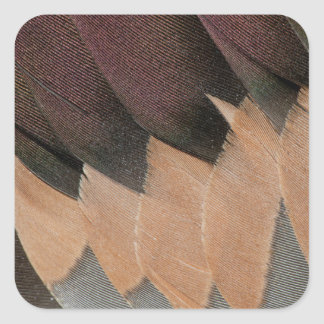 Pintail Duck Feather Design Square Sticker
