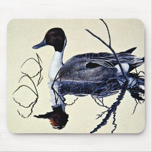 Pintail duck mouse pads