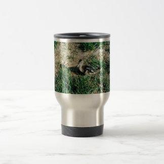 Pintail Duck Coffee Mugs