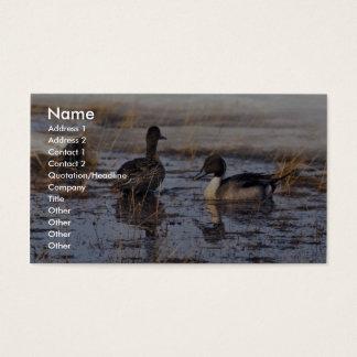 Pintail Duck Pair Business Card