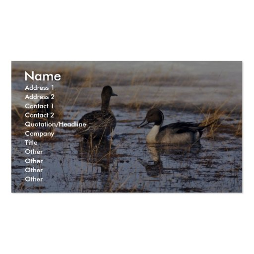 Pintail Duck Pair Business Cards