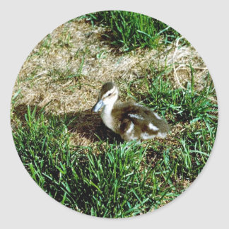 Pintail Duck Round Stickers