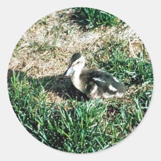 Pintail Duck Sticker