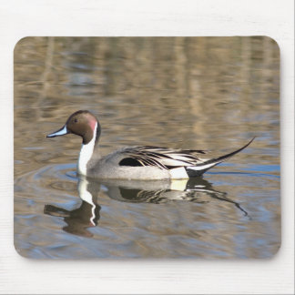 Pintail Duck Swims In A Pond Mouse Pad