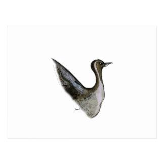 pintail duck, tony fernandes postcard