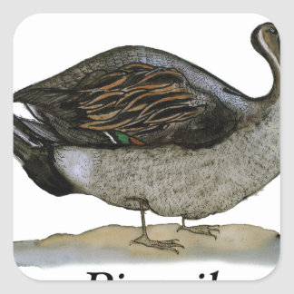 Pintail duck, tony fernandes square sticker