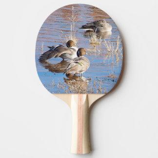 Pintail Ducks Birds Paddle Ping-Pong Paddle