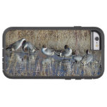 Pintail Ducks iPhone 6 Case