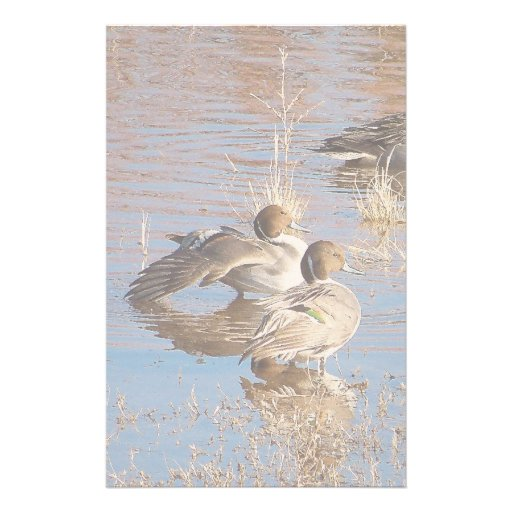 Pintail Ducks Stationery
