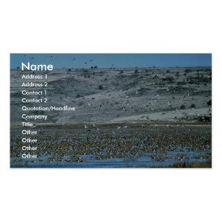 Pintail Flock Business Card Templates